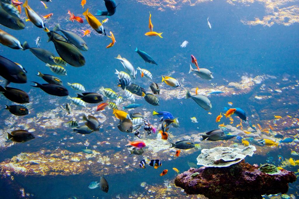 Aquarium De Biarritz Biarritz 64 Activit S